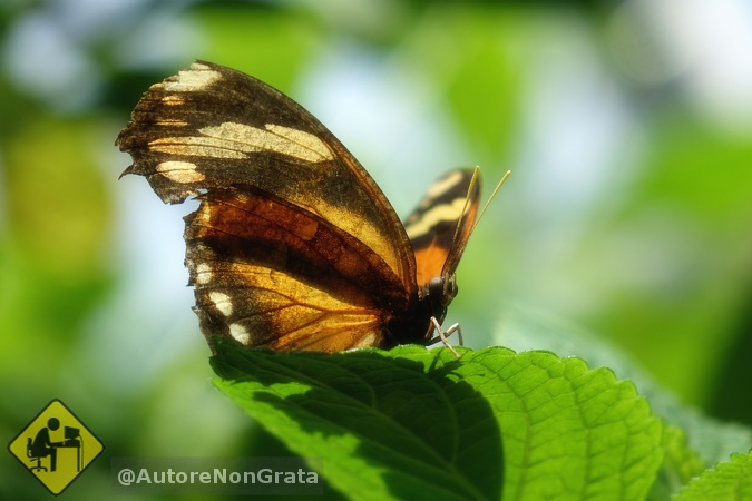 Schmetterling02