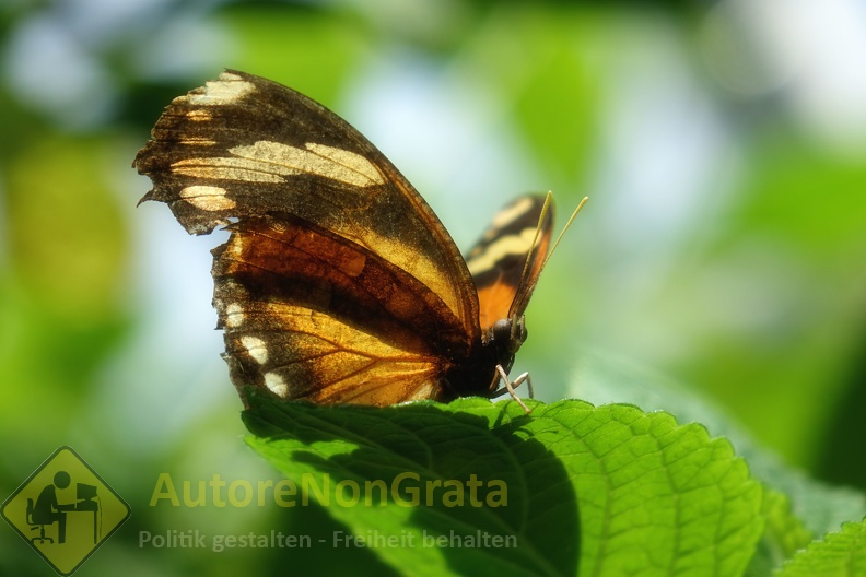 Schmetterling02.JPG